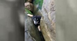 Zonguldak'ta kayalıkların arasına düşen yavru köpeği kurtardı