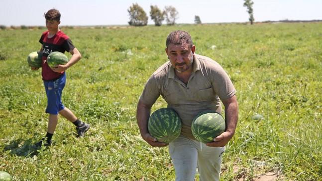 Adana karpuzu fiyatıyla üreticisini sevindirdi